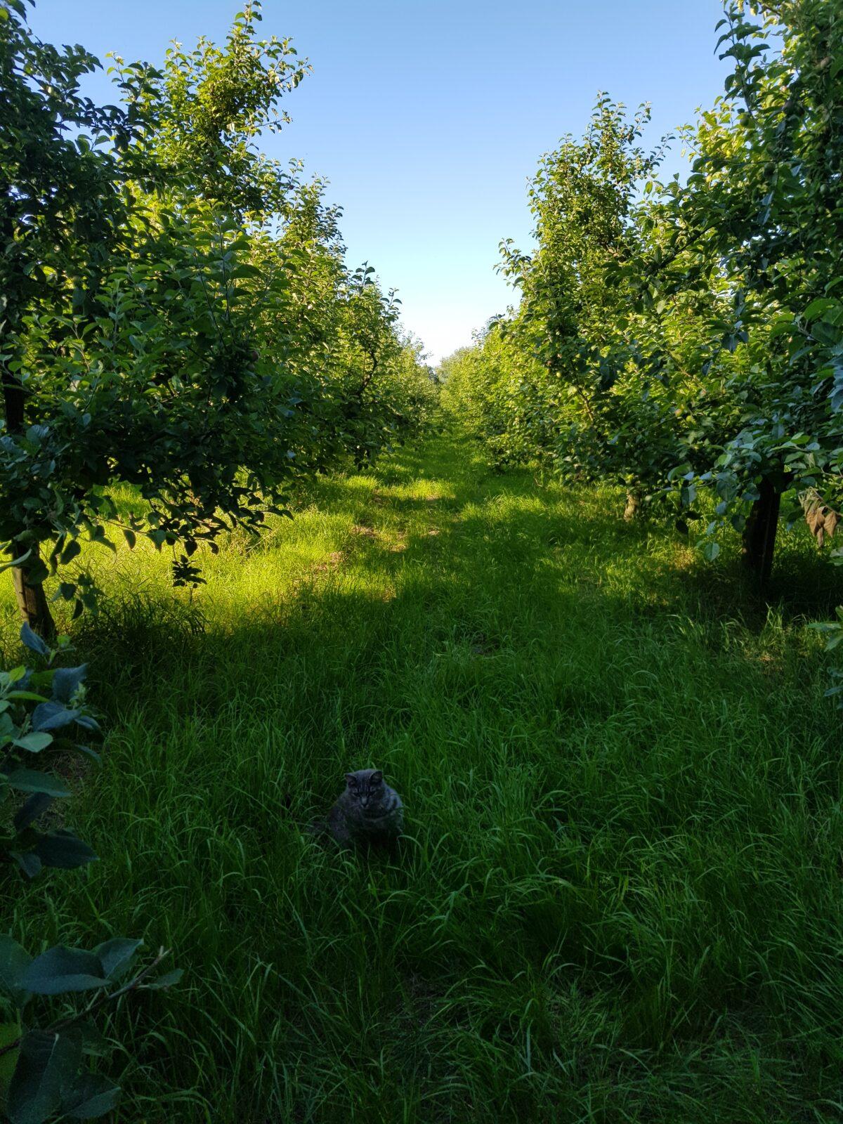 Agroforestrysystemen