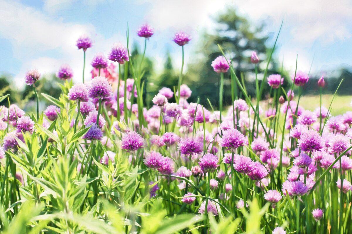 Kruidenrijk grasland