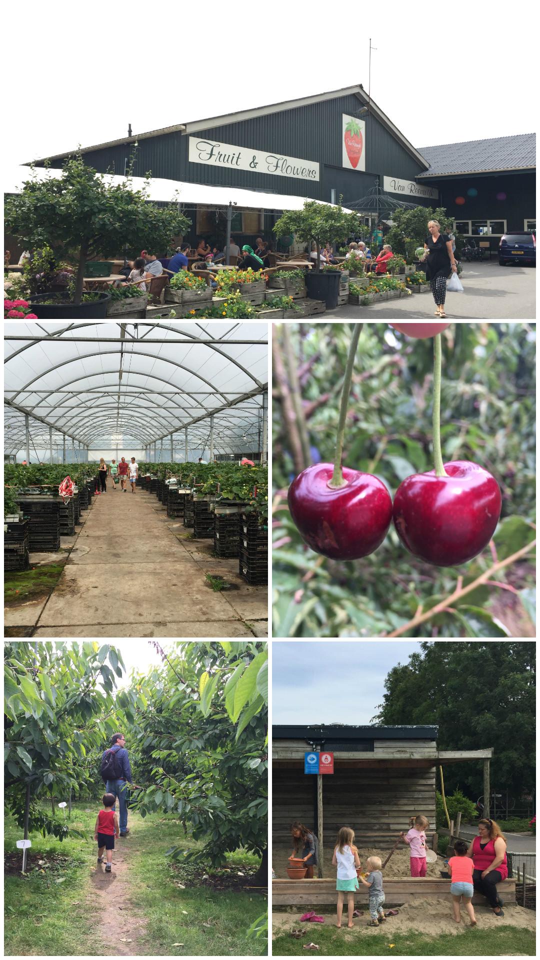 Van Reeuwijk Fruit & Flowers Abbenes
